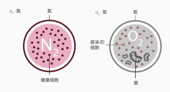 gra_cells