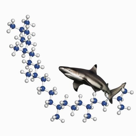gra_shark